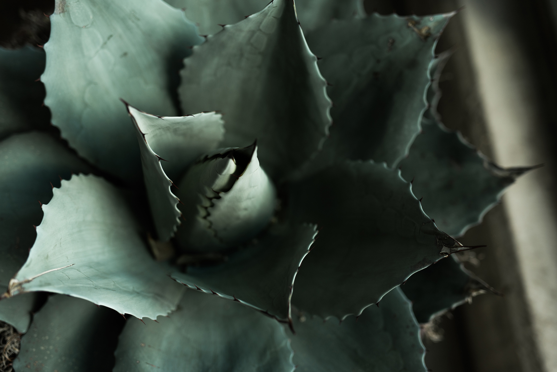 Moody Succulents at Red Butte Gardens