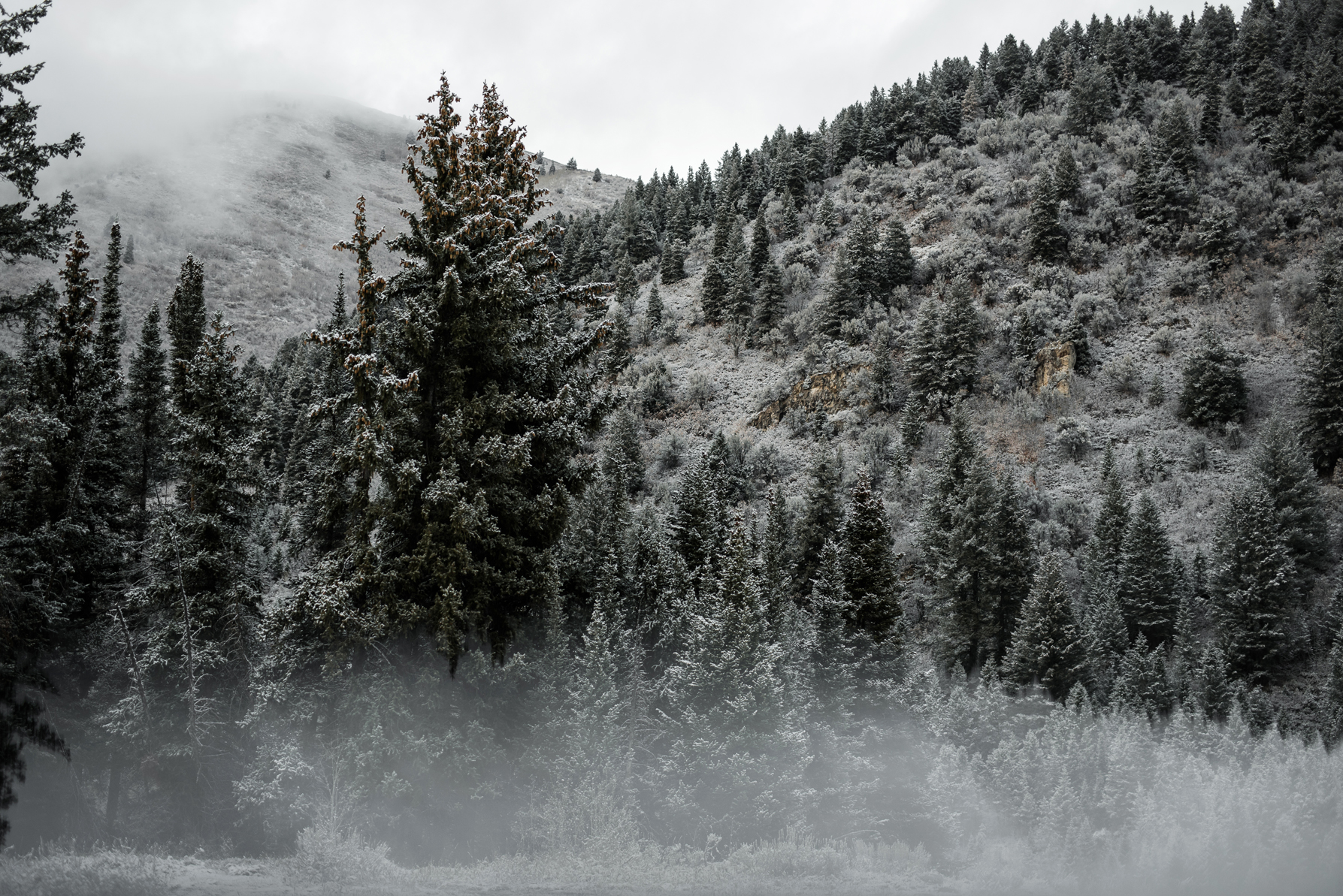 snowy landscape in big cottonwood canyon