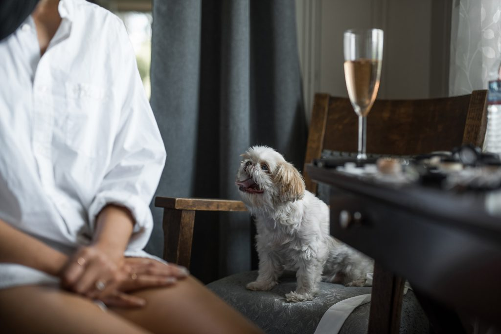 brides dog happily watching her as she gets ready
